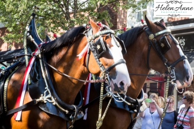 Clydesdales Doylestown 2016-9832-13