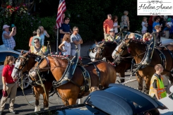 Clydesdales Doylestown 2016-9867-18