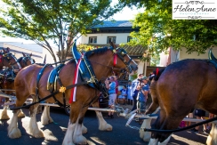Clydesdales Doylestown 2016-9920-31