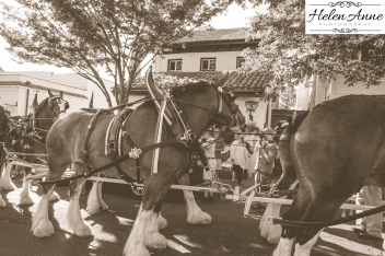 Clydesdales Doylestown 2016-9921-32