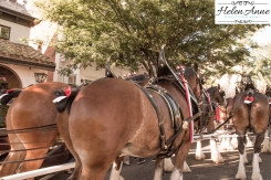 Clydesdales Doylestown 2016-9960-43