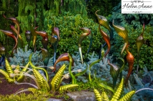 chihuly-seattle-2474-86