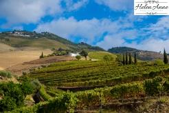 Beautiful vineyards!