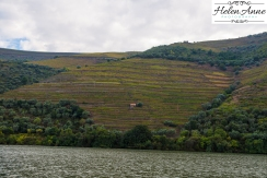 Douro River Cruise-1067