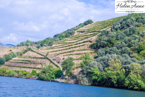 Douro River Cruise-1077