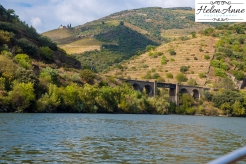 Douro River Cruise-1079