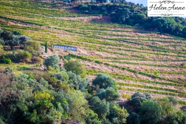 Douro River Cruise-1110
