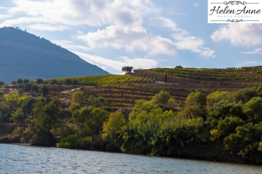 Douro River Cruise-1117