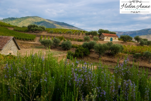 Quinta da Roeda-1164