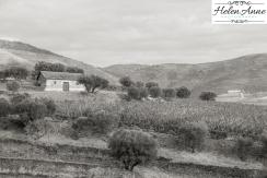 Quinta da Roeda-1166