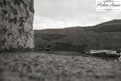 Quinta da Roeda-1188